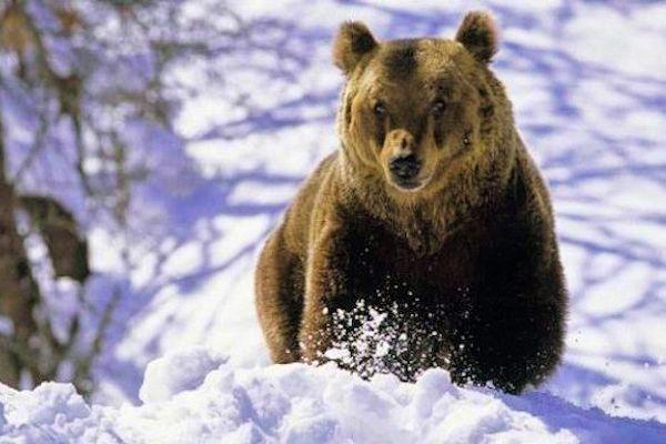 #orso