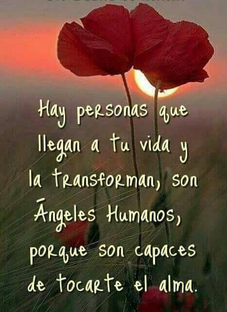 pensamientos positivos amor felicidad http://ift.tt/2eUCfKZ