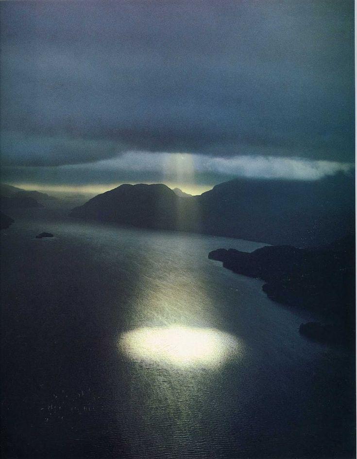 Nature's Spotlight