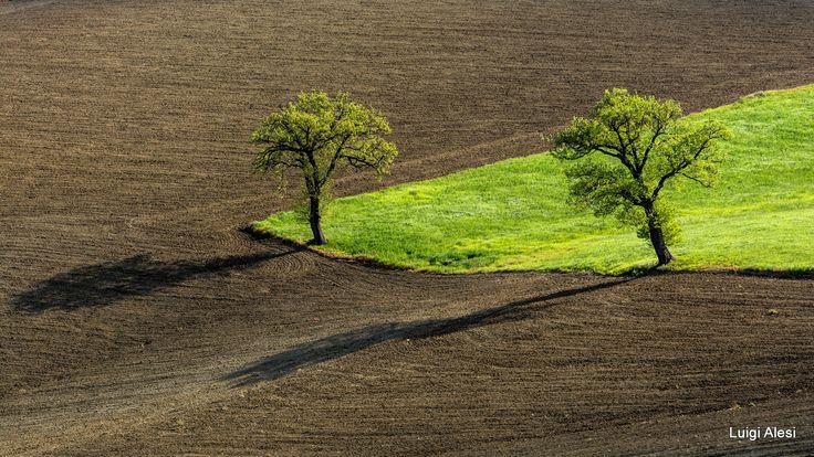il triangolo verde - campagna maceratese