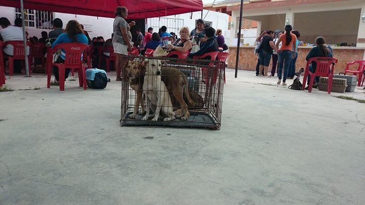 Inicia en Progreso sexta Jornada de Esterilización Canina y Felina