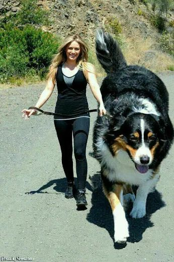 I would hate to feed this dog. I could almost ride him.
