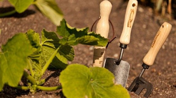 MAY-JUNE TIPS #Gardening #maggio #giugno #june #may #tools #tool #tips #howto #gardeningtips #gardentips #soil #strumenti #giardinaggio #calendariodeilavori #green #verde #leaves #leaf #foglie    www.thegreenrevolution.it
