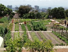 The Oranjezicht City Farm (OZCF) is a non-profit project celebrating local food, culture and community through urban farming in Cape Town
