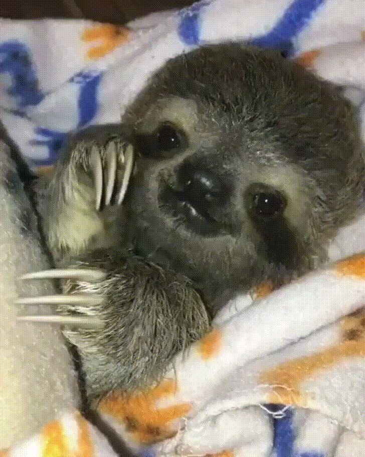 Happy baby sloth http://ift.tt/2zD2Hi9