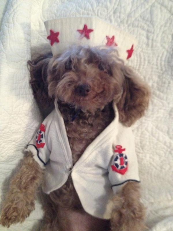 my sweet rescue Bebe, july 4, 2012