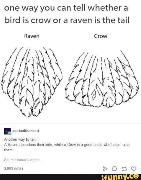 RWBY: Two Ways to Tell and Crown and a Raven Apart