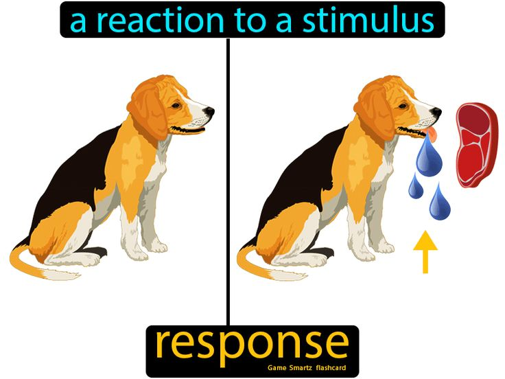 what is the definition of response in science
