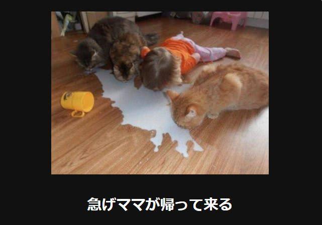 大喜利 猫23