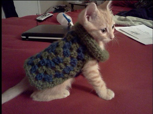 Ravelry: Project Gallery for Urban Granny Dog Sweater pattern by Lion Brand Yarn