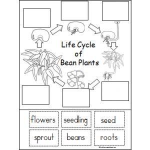 Les 11 meilleures images du tableau Fiches Montessori