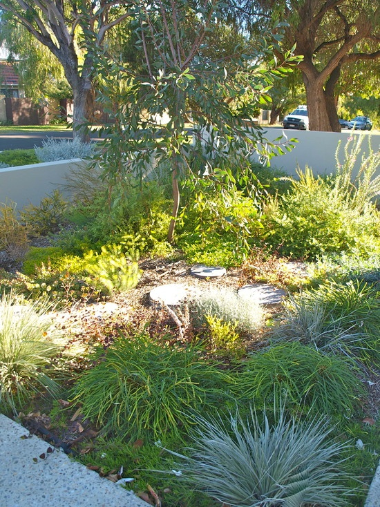 39 best images about aussie gardens on pinterest gardens for Large bushes for landscaping