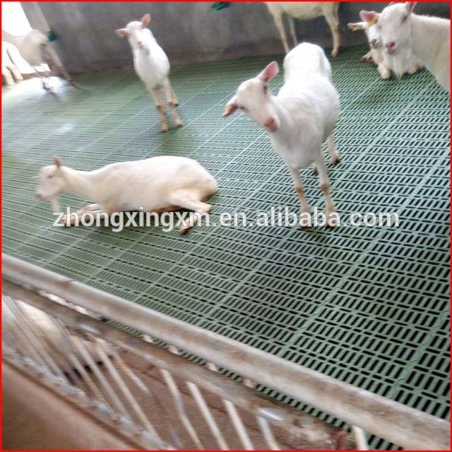 Source Goat Slat Floor For Goat Farming In India On M Alibaba Com Ovelhas Animais Fofos Barraca