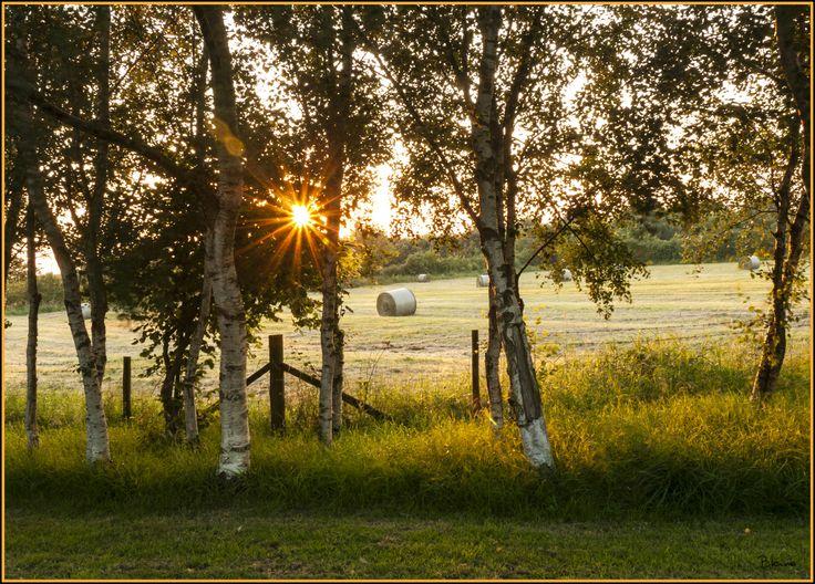 Silver Birch sunset @ Calcutt Marina www.calcuttboats.com
