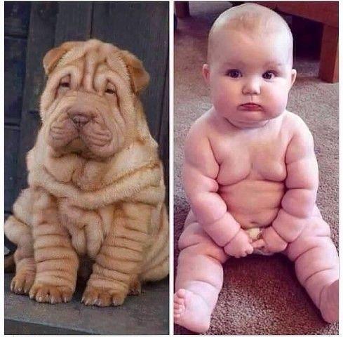 #dog baby