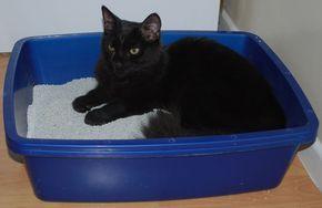 6 Consejos para controlar el olor de la caja de arena de los gatos