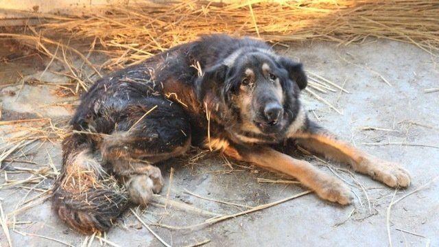 Sponsorizza Camera dei Deputati : Carcere per chi maltratta gli animali! Inaspriamo le pene!