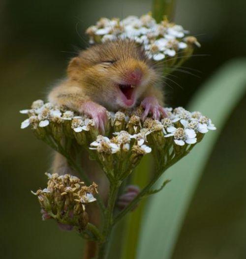 so cute: Mice, Happy Faces, So Cute, Giggl, Pure Joy, So Happy, Baby Animal, Flower, Make Me Smile