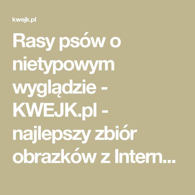Rasy psów o nietypowym wyglądzie - KWEJK.pl - najlepszy zbiór obrazków z Internetu!