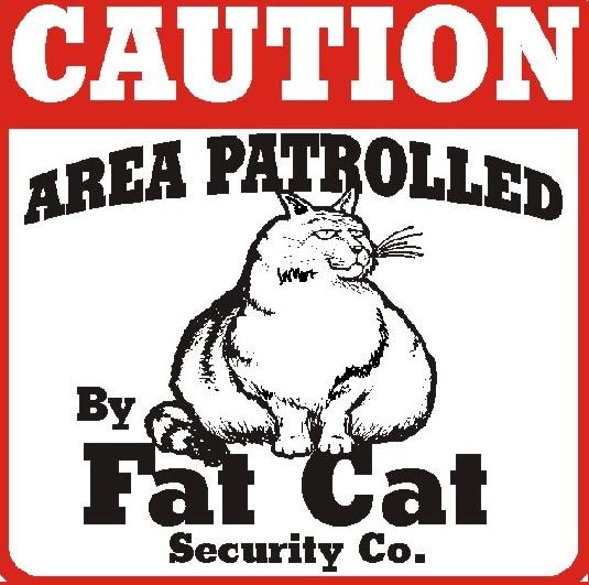 Google Image Result for http://dl10.glitter-graphics.net/pub/305/305580o7yhcy6wt3.jpgCat Caution, Cat Humor, Pets, Funny, Crazy Cat, Cat Signs, Fat Cats, Caution Signs, Cat Lady