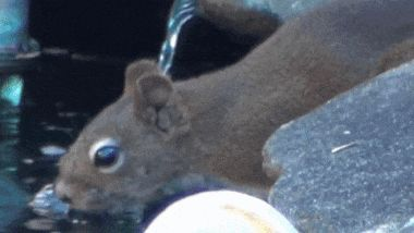 Hey, squirrel, it's my water