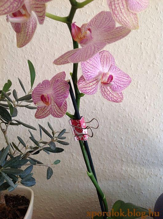 Ha színes iratcsipeszt veszel (vagy lefested, bevonod pl. dekortapasszal, stb.), akkor kifejezetten szép és ízléses megoldás virágtámaszokhoz.