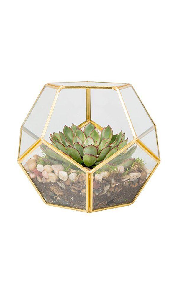 Gl Terrarium Succulent Air Plant Sphere Deal Price 23 99 From