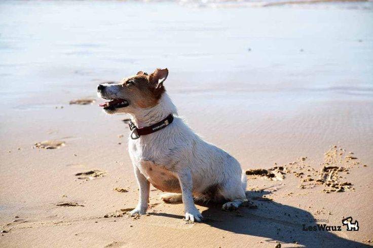 Wie schädlich sind Nervengifte im Hunde Floh- und Zeckenschutz? | LesWauz