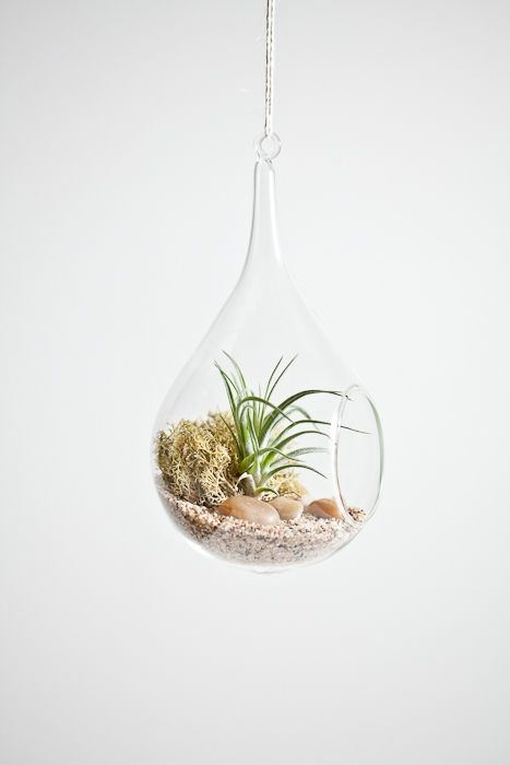 teardrop terrarium, just got one of these beauties for the apartment :D