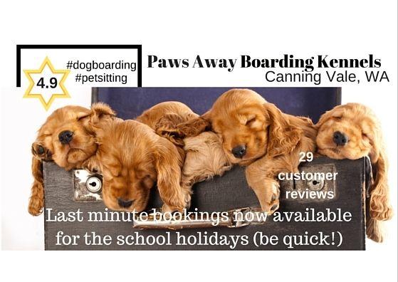 #schoolholidays #petboarding #PawsAway Boarding Kennels #Canning Vale #WA http://www.pawsawayboardingkennels.com/ #vacancies