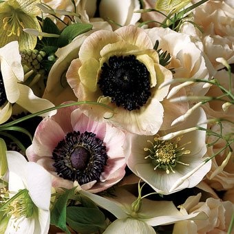 White and pink Anemone: White Gardens, Colors Combos, White Anemones, Fall Flowers, Bridal Bouquets, Blushes E.L.F., Fall Wedding Flowers, Anemones Flowers, Flowers Ideas
