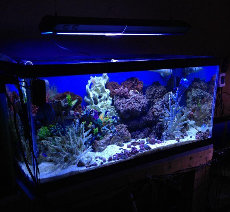 saltwater aquarium 40 gallon 40 gal salt tank my