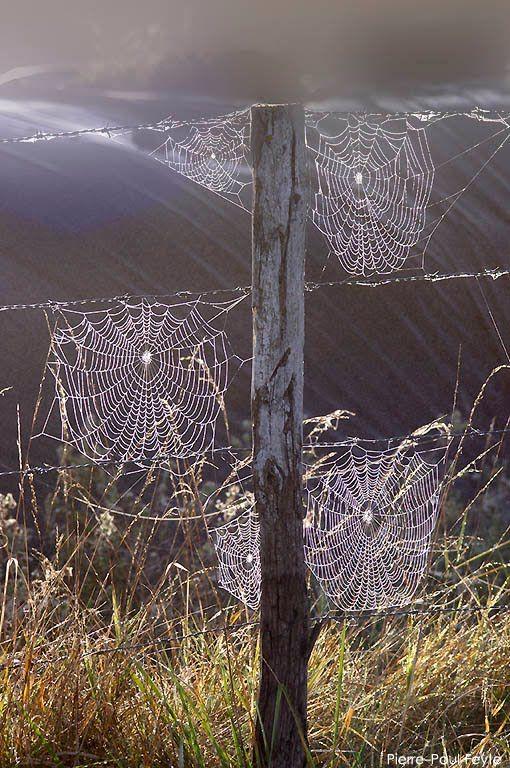 fence webs