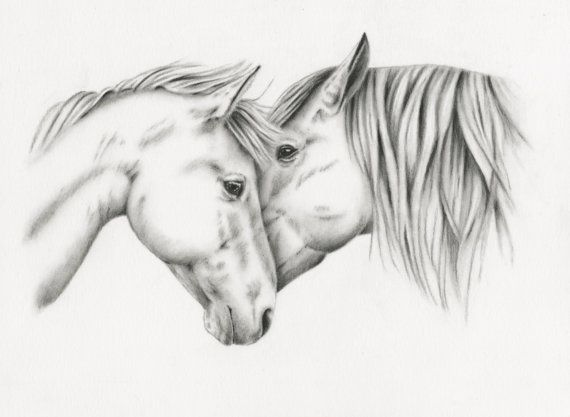 "Original Charcoal Drawing, White Horses Sketch, Horse Art, - ""Equine Embrace"" - 8""x10"", Horses Nuzzling, Horse Couple"