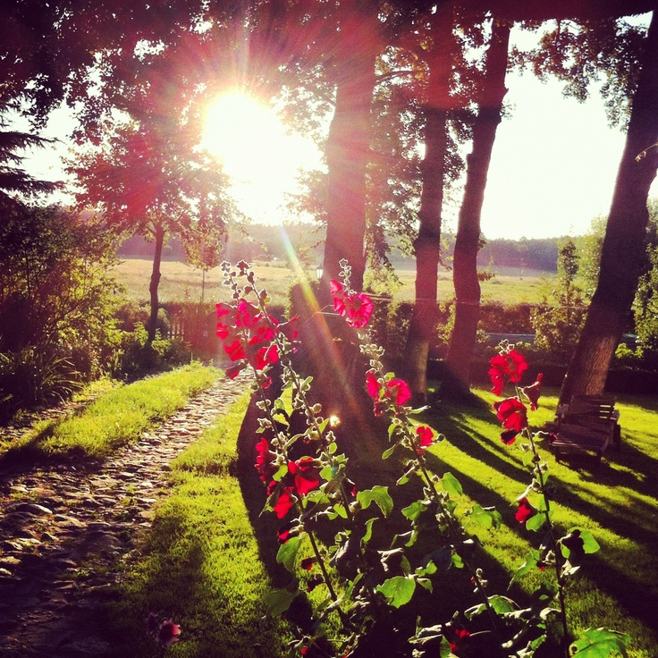 garden & sunset