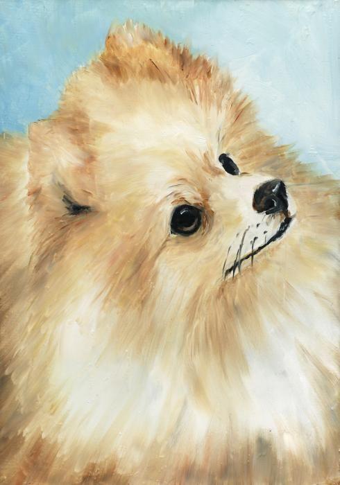 Vintage Pomeranian art images | pomeranian-charlotte-yealey.jpg