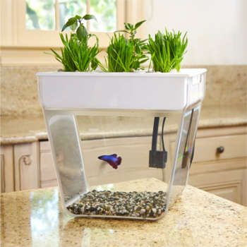 17 Best Ideas About 3 Gallon Fish Tank On Pinterest Betta Fish Tank Betta Tank And Aquarium