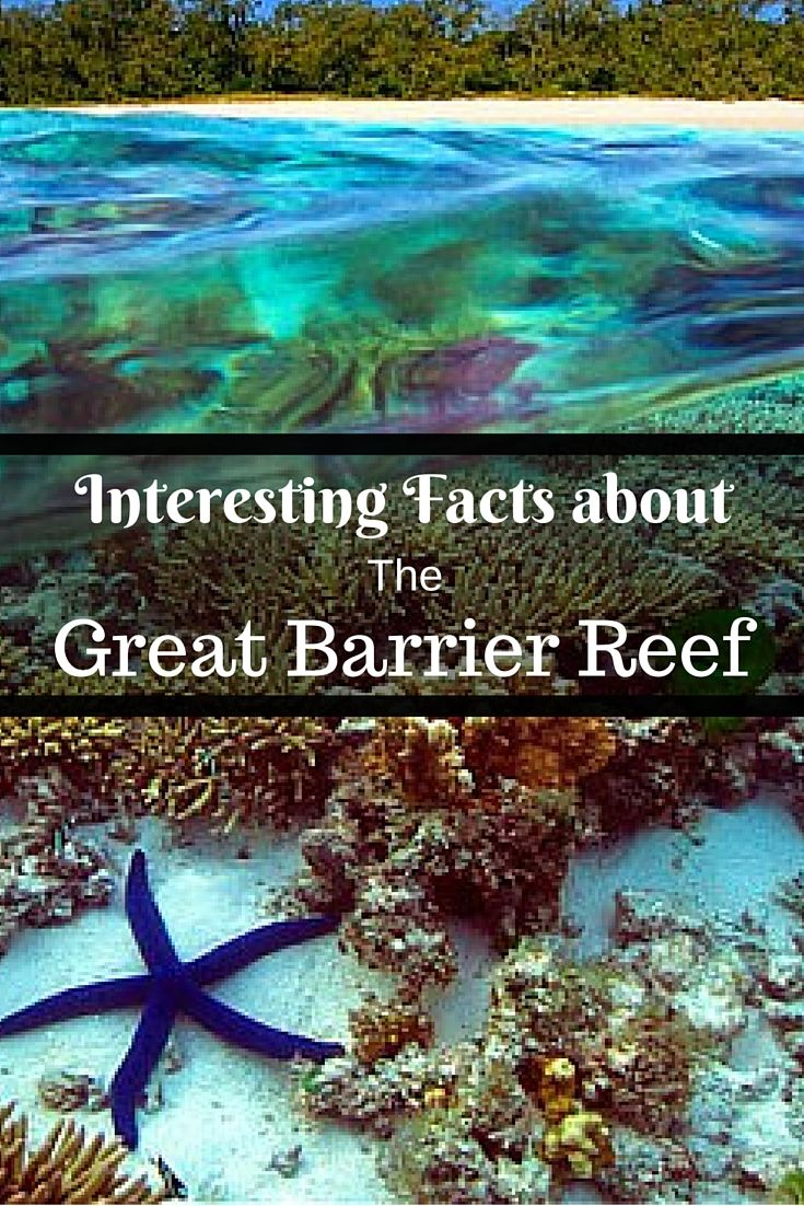 30 Interesting Facts about The Great Barrier Reef of Australia - Art of Scuba Diving