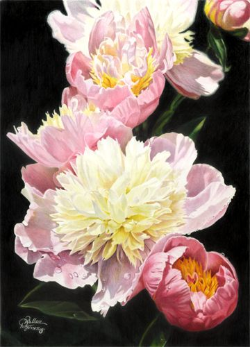 Dianna Wallace Soisson, colored pencil artwork. I love the composition of this and and dark background that lets the pink jump out at you.