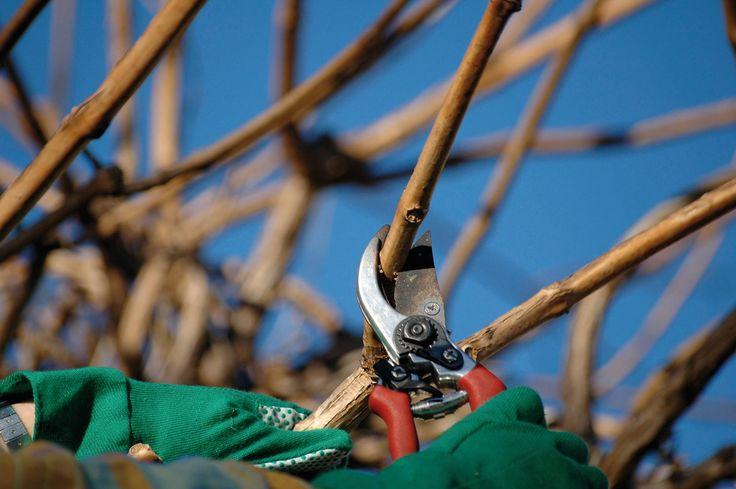 Le 4 regole per la potatura alberi da frutto a febbraio: http://blog.verdeimpianti.it/index.php/regole-per-la-potatura-alberi-da-frutto/