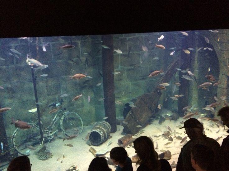 Ozeaneum - größtes Salzwasseraquarium der Welt...