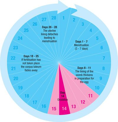 Ovulation Symptoms, Calendars, and Calculators To Help Determine Fertility and Time Intercourse