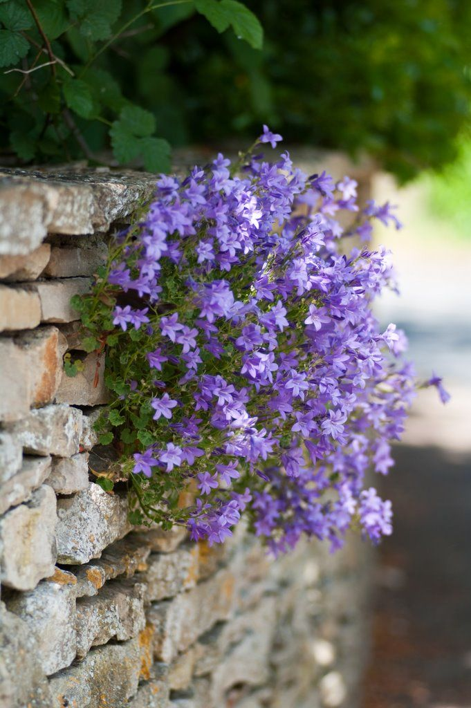 wall-flowers. leave holes in stone wall for hidden flower planters