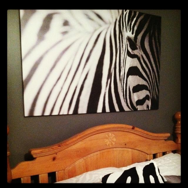 Best 25 Zebra Bedroom Designs Ideas On Pinterest: 10 Best Ideas About Zebra Bedroom Decorations On Pinterest