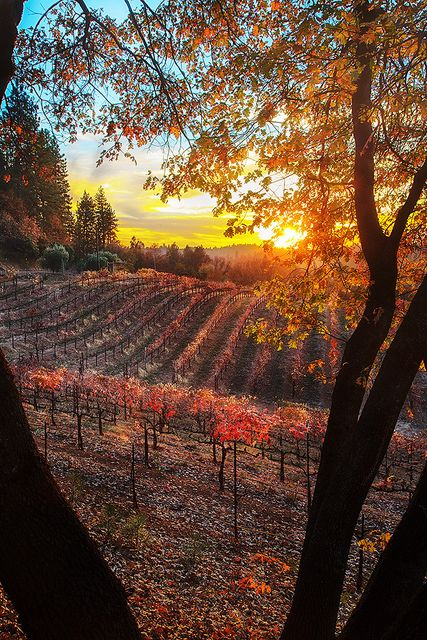 Boeger Winery sunset view   Flickr - Photo Sharing!