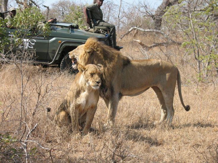 Robert and Marty's Safari