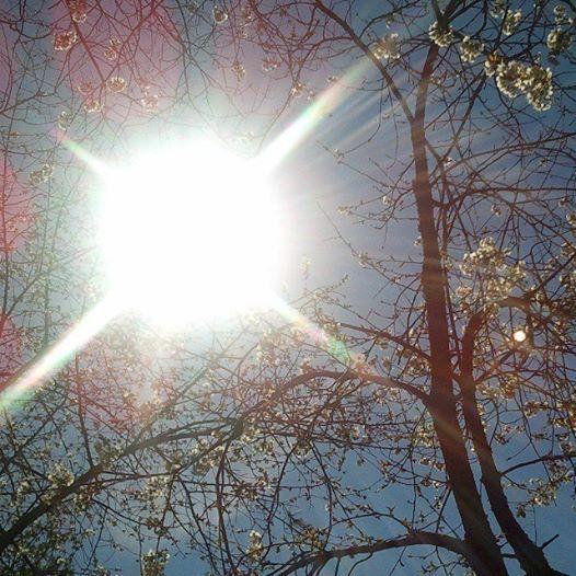 Spring! Sun!