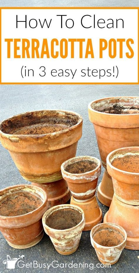 Terracotta plant pots are notorious for getting a crusty white residue on them over time. Follow these 3 quick and easy steps to clean terracotta pots.