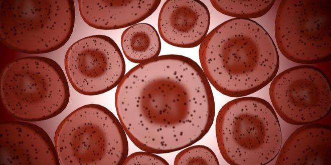 Cordone ombelicale: caratteristiche e potenzialità  Un argomento che attira molto l'attenzione negli ultimi tempi riguarda il potenziale terapeutico delle cellule staminali del cordone ombelicale. Ma cos'è esattamente il cordone ombelicale?  #Gravidanza #CordoneOmbelicale #Staminali #Biobanche