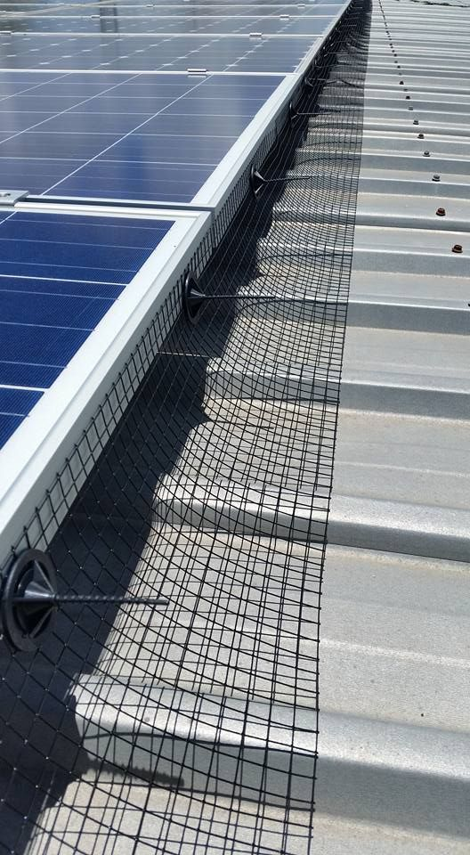 Gutter-Vac Townsville pigeon proofed these solar panels. Gutter-Vac Townsville cleaned out pigeon nests from under these solar panels and fitted guards so that they couldn't get back there.   Gutter-Vac does much more than just clean gutters! Find out how Gutter-Vac Townsville can help you by calling 1300 654 253 or visiting www.guttervac.com.au